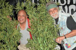 Cannabis Consumers - Cheech and Chong